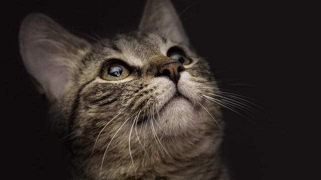 毛孩臨終掛念誰?寵物溝通師:牠們不懼死 卻怕飼主無盡的牽掛