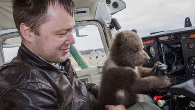 史上最萌機師!小熊流浪機場被收養 飛行員每天花兩小時陪牠冬眠