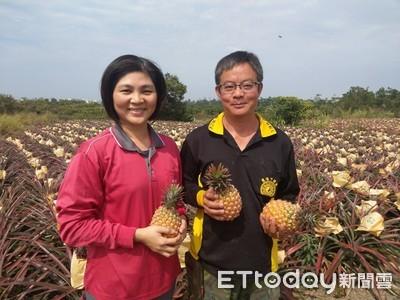 洪進麟、潘婷毓種出完美酸甜比例鳳梨