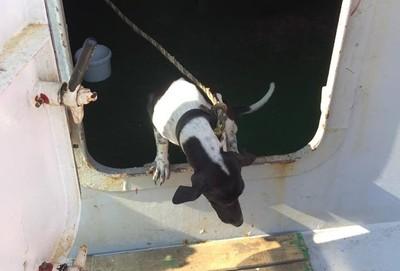 泰汪誤上香港船 找到主人卻被撲殺