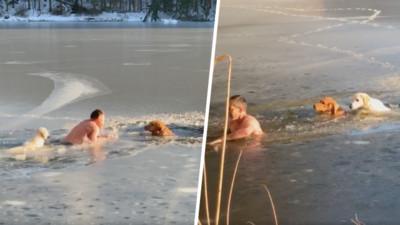 黃金獵犬受困結冰湖 路人救援轉頭一看...自家汪汪也跟著跳下來