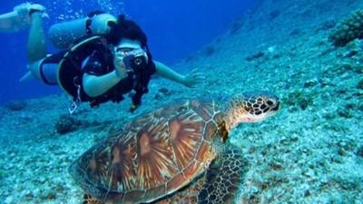 不會游泳也能潛水!0負重自由潛水遊覽海底 旱鴨子也能當美人魚