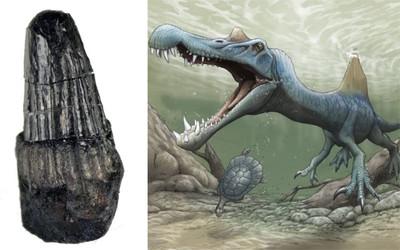 日本和歌山挖出「棘背龍」化石
