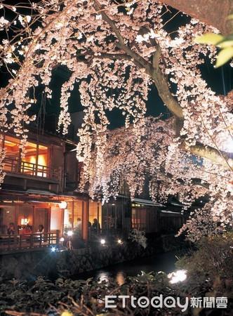 ▲▼京都祇園白川櫻花夜間點燈。(圖/京都市台灣推廣事務所)