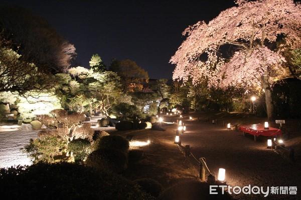 ▲▼京都知恩院夜櫻點燈。(圖/京都市台灣推廣事務所)