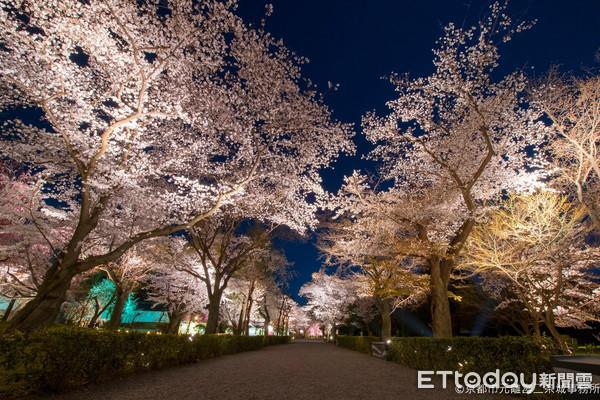 ▲▼二條城櫻花祭。(圖/京都市台灣推廣事務所提供)