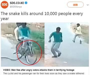 前輪捲進眼鏡蛇 兩男秒跳車狂奔