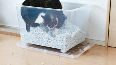 貓砂盆一個就夠! 「乾淨比數量更重要」主子就能安心不亂尿