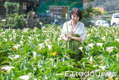 竹子湖海芋季 柯文哲:產值逾1億