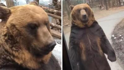 逼熊直立走路「討好遊客」!韓遊樂園挨轟:只顧賺錢殘害動物
