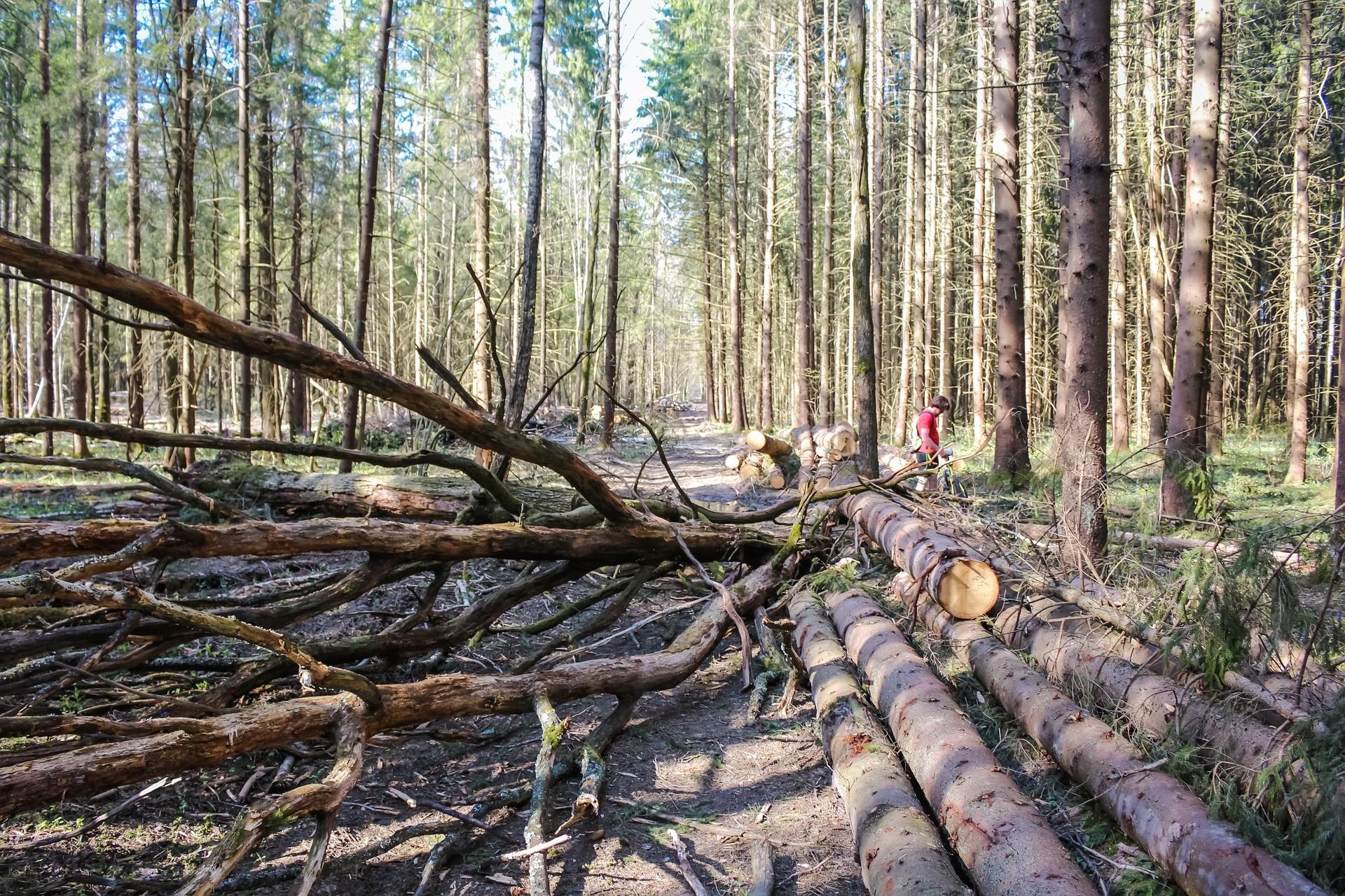 ▲拖樹木,砍伐樹木,砍樹,木材,大樹,木頭 。(圖/取自免費圖庫Pixabay)