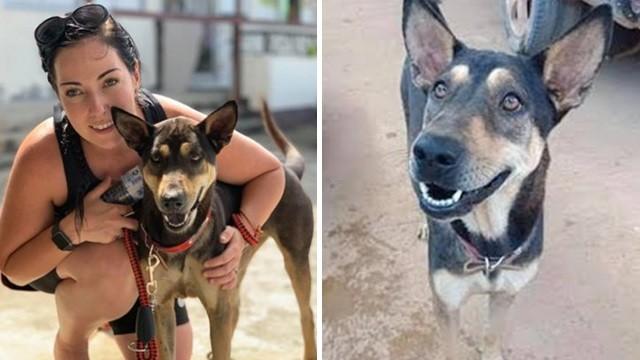 「流浪狗救了我們一命」澳夫妻遊泰遭兇猛猴群圍攻 回程決定領養牠