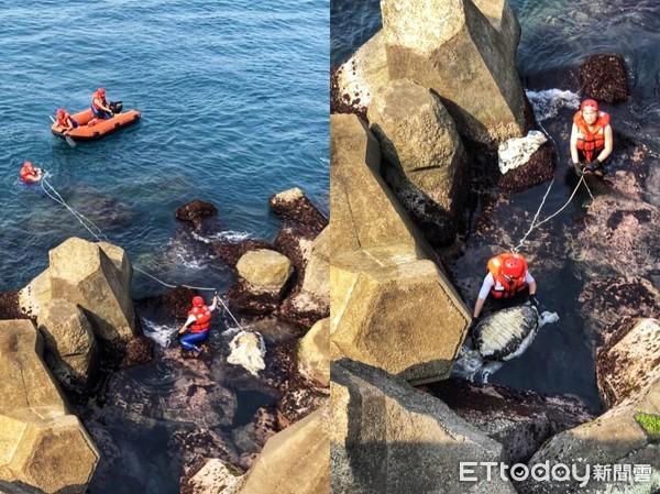3個月23件海龜死亡「數字暴增」 海巡憂心海洋生態保育被破壞