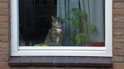法國部長愛貓取名「脫歐」 因為牠總是喵喵叫...打開門又不走了