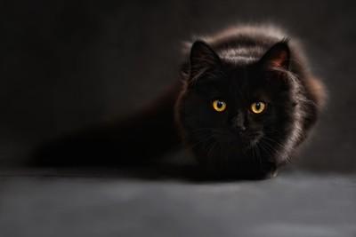 黑貓深夜搔腳 帶一家8口逃火災