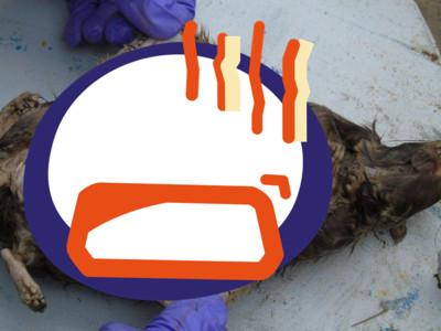死老鼠肚內沒器官 全遭「禁藥手機」塞滿