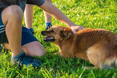內外蟲蟲危機幫狗狗「一塊」解決