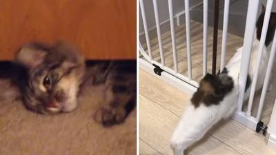 柵欄再細「頭過身就過」!貓奴PO影片證實都市傳說:貓真的是液體