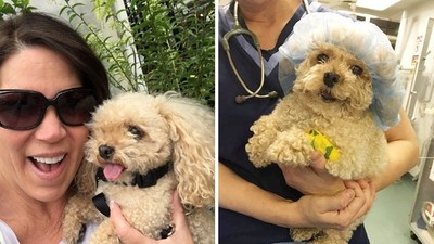 領養的「都不如原來那隻」!富婆採集過世愛犬組織 複製三隻繼續養