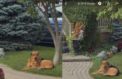 鄙視回眸被拍 Google幫狗馬賽克