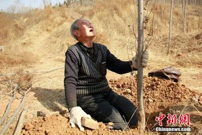 河北截肢老兵爬行植樹1.7萬棵