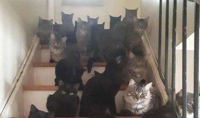 兩隻貓沒結紮 指數型失控變120隻
