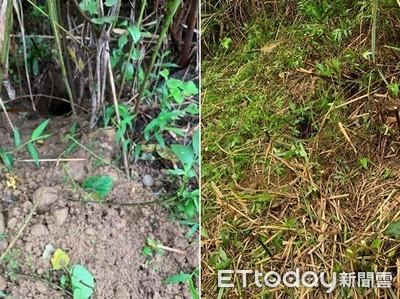 掃墓發現3個洞 他:祖先有鄰居