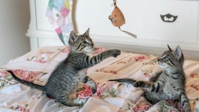 貓咪玩具這樣挑!遊戲是「狩獵模擬」 9成飼主都忽略這三點