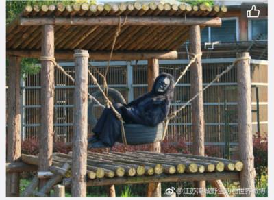 動物園動物真的是工讀生 園方:愚人節