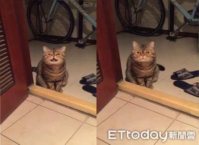 廁所上太久 呆萌貓門口喊:趕快