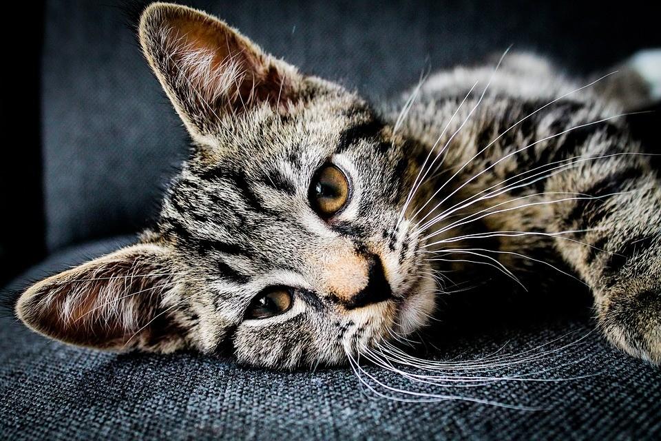 ▲▼貓咪。(圖/取自免費圖庫Pixabay)