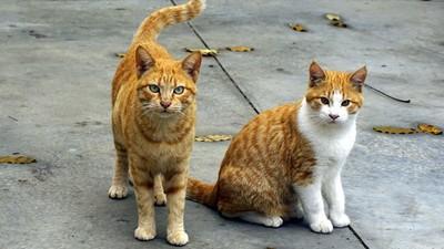 貓咪愛咬人「找隻更兇的來陪」? 以貓治貓更可能形成惡性霸凌