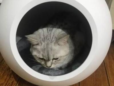 智能冷暖窩「倒掛」 活活悶死愛貓