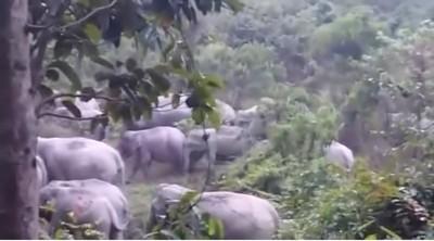 50頭野象凶狠經過 男躲樹上4小時