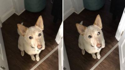 狗狗暗示自己想出門 眼神超有戲主人秒懂!網笑:心理系的嗎