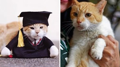 胖橘被全校師生「餵出脂肪肝」!校方辦畢業典禮送養,牠一臉不甘願