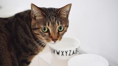 貓主子的日常危機!吸塵器聲嚇到失禁 「柑橘味」清潔劑可能害中毒