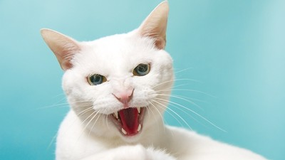 幼貓長到「3個月」是教養關鍵期! 隨地尿半夜叫…應對良方在這