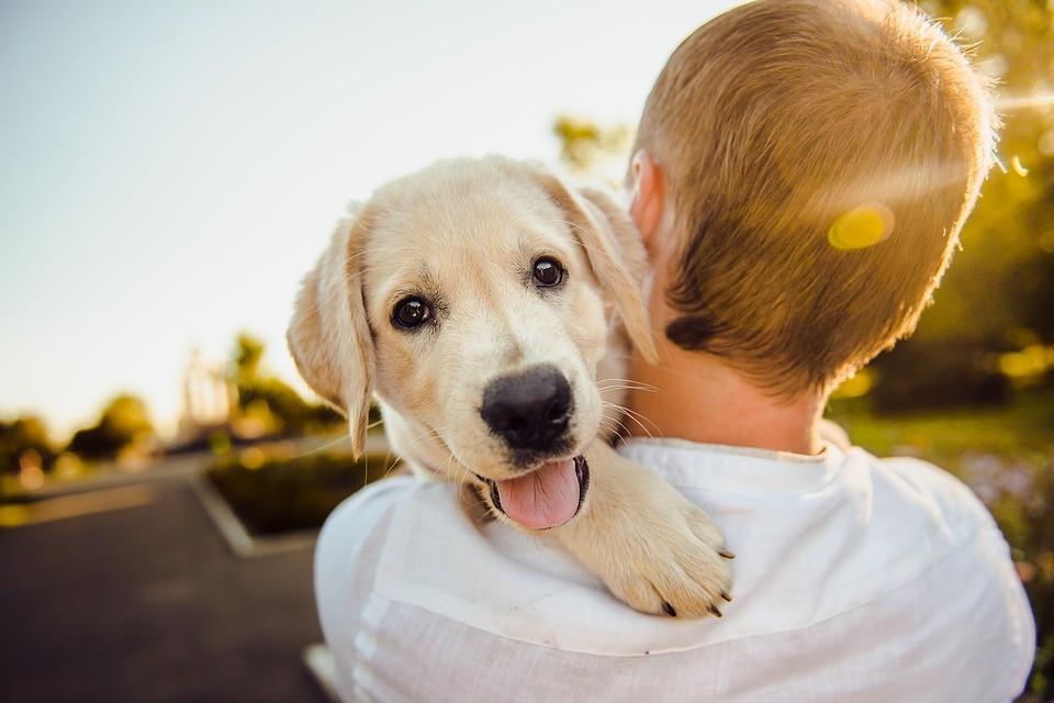 ▲▼養寵物。(示意圖/取自免費圖庫Pixabay)