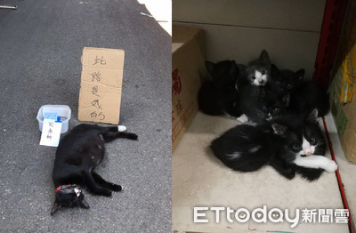 市場浪貓遭毒死!5貓等牠餵奶