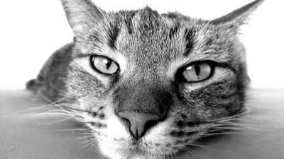 抓到了!專家證實貓咪聽到名字有反應 耳朵頭部顫動卻裝沒事