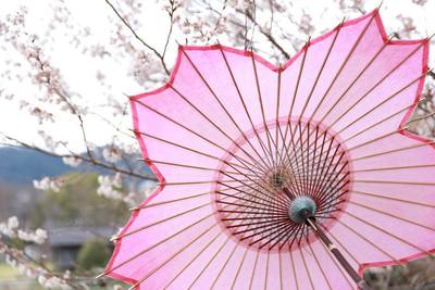 櫻花季洗版! 日本傳統工藝「手漉和紙櫻花傘」 近看還有迷你小櫻花