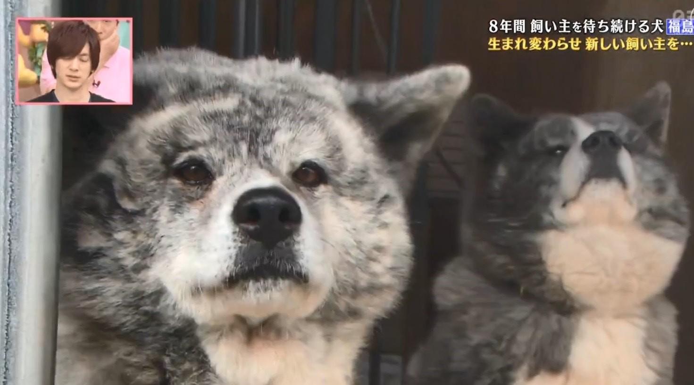 大檸檬用圖(圖/翻攝自節目《天才!志村動物園》)