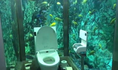 日本餐廳打造水族館廁所 網直呼超美