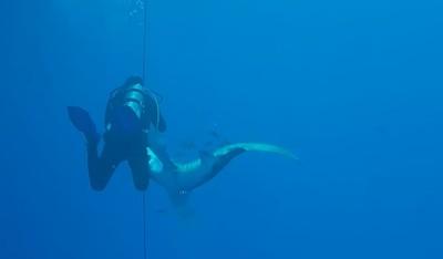 潛水遇鯊魚噬腿 超級大口慘縫50針