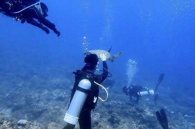 小琉球潛水客摸海龜 一張照片可罰30萬