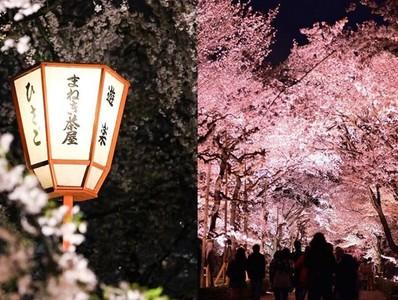 在百年古城看夜櫻燈光秀太浪漫