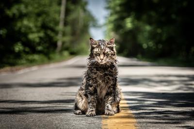 貓塗滿僵屍妝 訓練師1個妙招成功