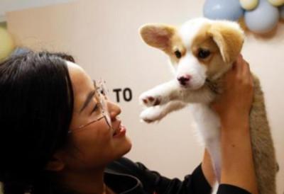 寵物護理員笑談9年辛酸:遛狗是日常