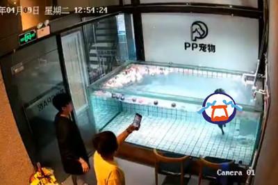 法鬥被丟水中「游泳」掙扎30秒斷氣